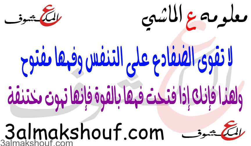 "Photo of معلومه ع الماشي "" الضفادع """